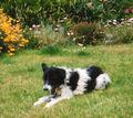 Pebs in Garden