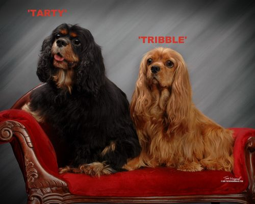 Tarty and Tribble -