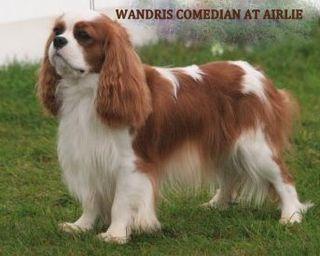 WANDRIS