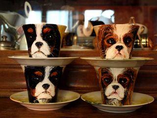 Cavalier_cups