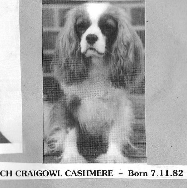 craigowl cashmere