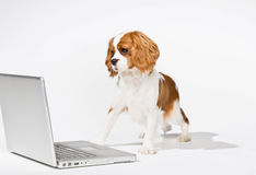 Puppy-laptop-computer-6605085