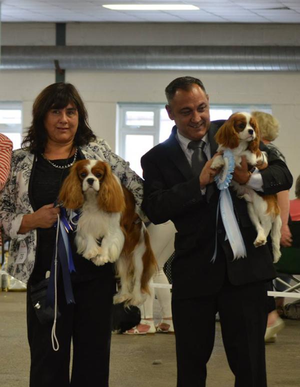 - Cavalier Chatterbox Welsh Terrier 6 Months