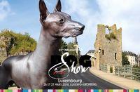 92-dog_show